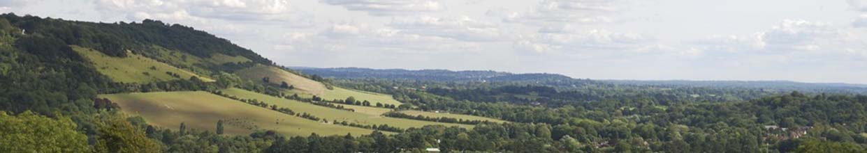 Hills in the North Downs in Dorking in Surrey with vineyard in foreground